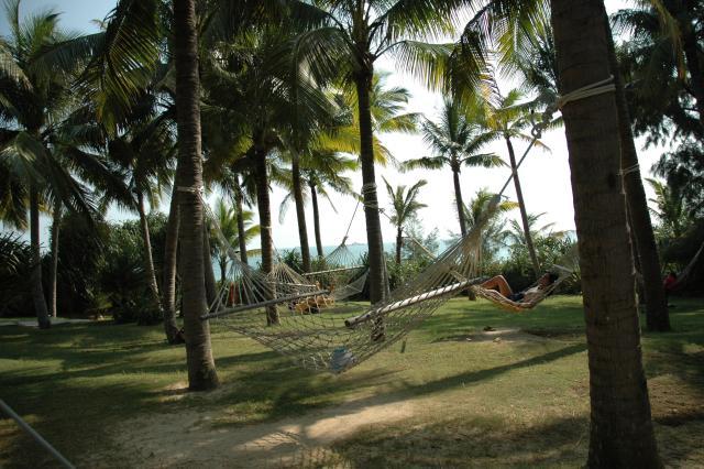 椰树林吊床